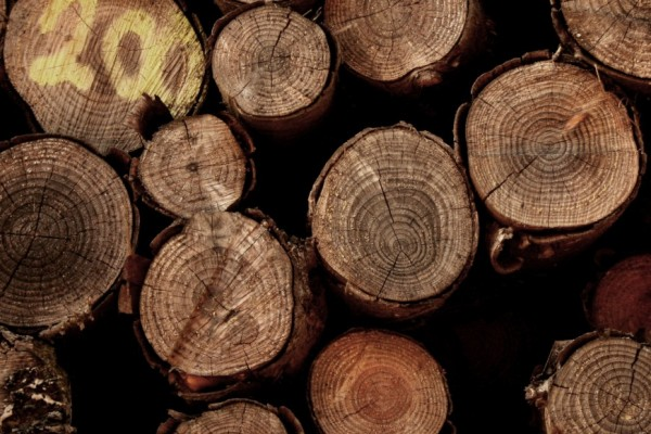 Waldbewertung